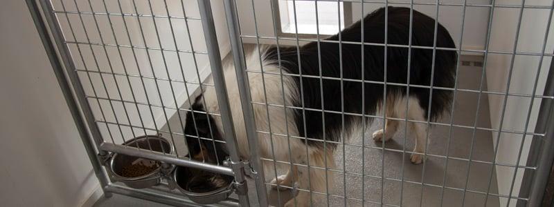 Dog Kennel Interior