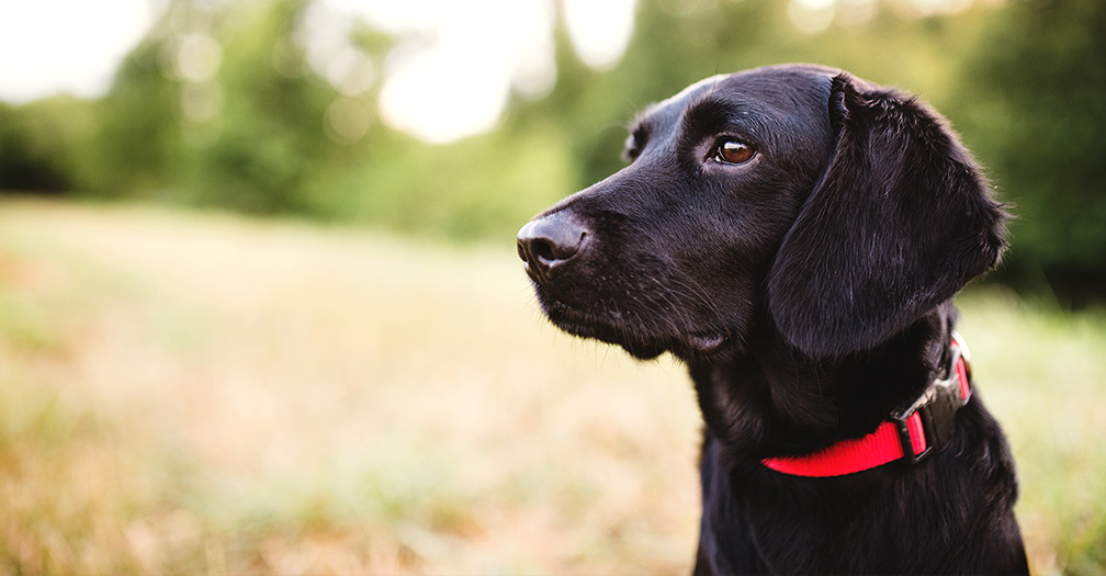 Homestead Animals: What to Look for in Chicken Coops & Outdoor Dog Kennels