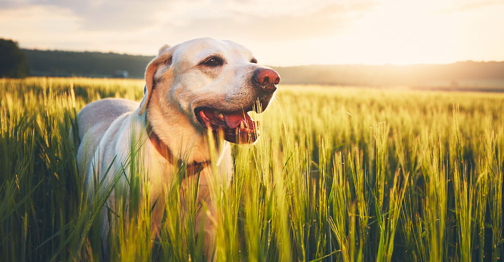 How to Ensure Your Working Dog is Healthy & Happy
