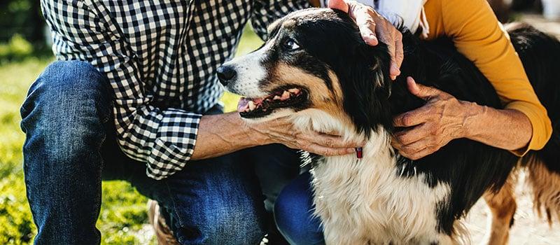 Happy Dog, Happy Owner