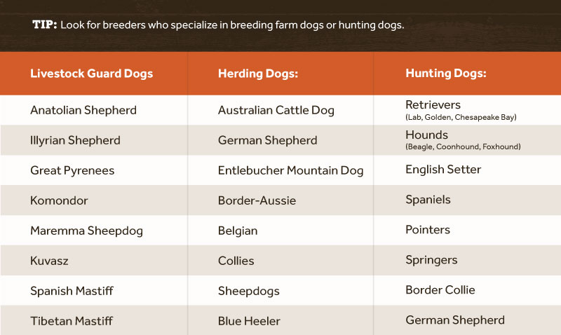 Choosing the Best Breed