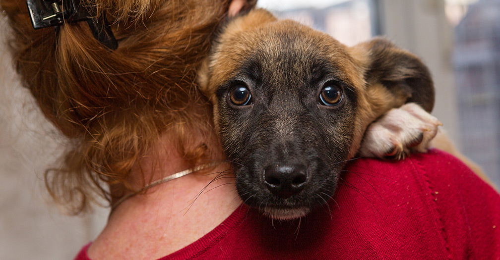6 Tips for Rescue Dog Adoption