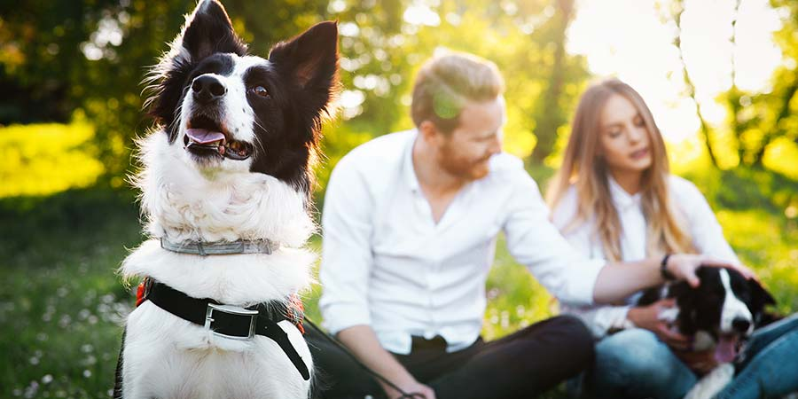 6 Ways to Keep Your Dog Happy When He's Home Alone