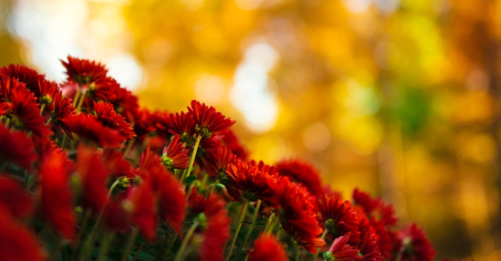 Fall Gardening Ideas and Storage
