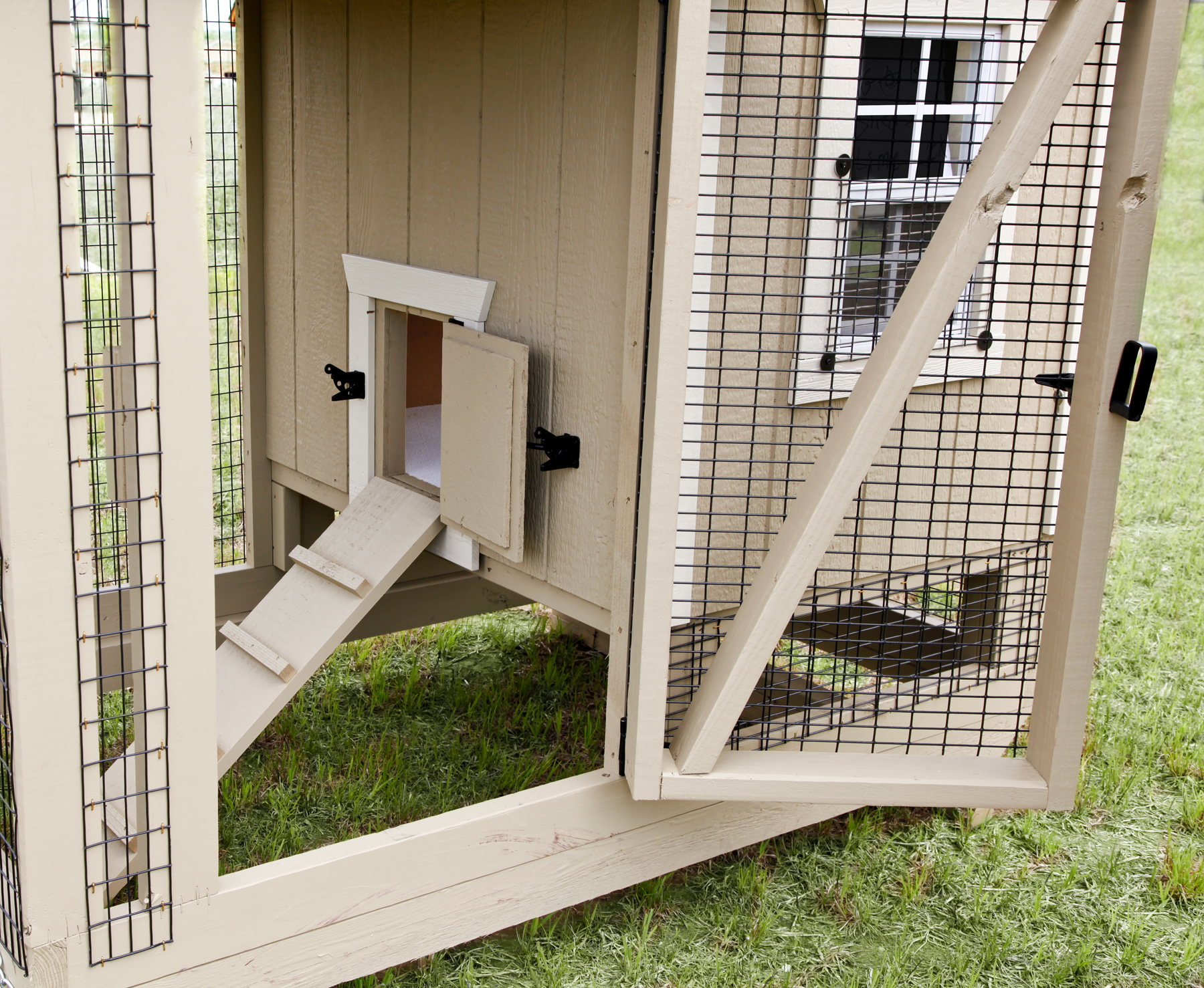 Inside a Backyard Chicken Coop