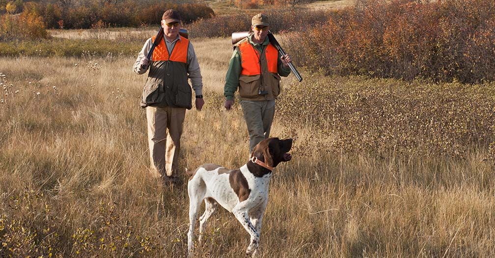 Bird Dog Housing: What To Do About Tight Spaces & Dander Allergies