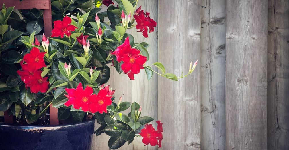 Create a Beautiful Backyard with Cheap & Easy DIY Decor Ideas